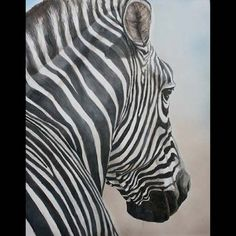 Charlotte Yealey - Pennsylvania  Zebra Look - 20 x 15 inches  colored pencil, acrylic