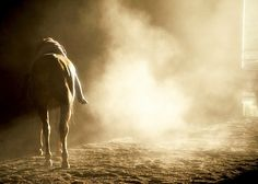 Love this photo... Equine Love