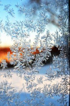 Lovely frost. Shelmerdine Garden Center at 7800 Roblin Blvd in Headingley #winnipeg
