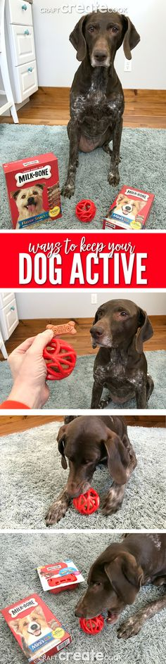 Keep your dog active