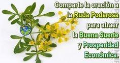 COMPÁRTELA ES MUY PODEROSA PARA ATRAER LA BUENA SUERTE Y FORTUNA