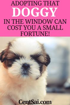 Adopting that doggy in the window can cost you a small fortune! A couple finds out that dog ownership involves a lot more than a $15 adoption fee.