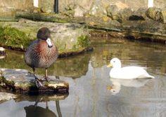 Wildfowl and Wetlands Trust Arundel