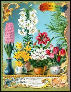Peter Henderson & Co. 1897 - Rainbow Collection [BD273-8511] : Wholesale and Resale product opportunities for the gift shop and wall art markets, A premium fine art product at wholesale prices