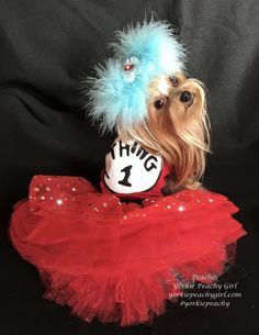 I am dressed as THING 1 for my Pet Therapy visit to the Children's Hospital SEUSS-O-Ween party. Girls World, Childrens Hospital, Well Dressed, Yorkie, Therapy, Cute Outfits, Peach, Thing 1, Halloween