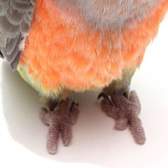 Find out everything you need to know about bird foot health and what perches to choose for your pet bird.