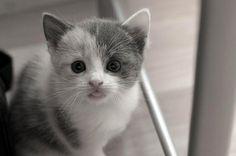 I want a kitty!!