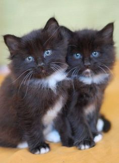 Awwwww, I think they must be twins !