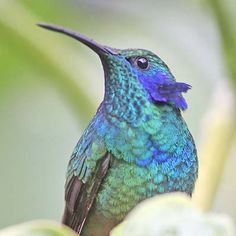 Come to Costa Rica and feed the hummingbirds!