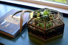 DIY: geometric terrarium