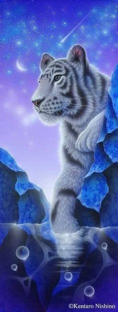 """White Tiger Sunset Dufex Foil Picture Print size 6/"""" x 8/"""""""