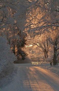 Licht door de bomen..