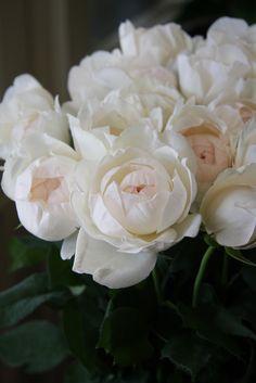 roses peonies?