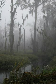 Season Of The Witch - A Southern Gothic Tale - swamp Theme Tattoo, Gothic Aesthetic, Southern Gothic, Belle Photo, Mists, Nature Photography, Landscape Photography, Scenery, Fantasy