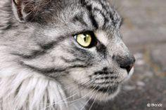 © Blende, Nina Berg, eiserner Blick | Das ist die kleine katze von einer Bekannten.