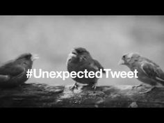 first direct: The unexpected tweet