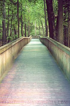 Cape May County Zoo, NJ. This is an elevated boardwalk that you follow to visit the animals. A wonderful experience.