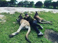 2PM, kangaroo, and asian Bild