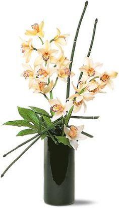Cymbidium Orchids, Snakegrass, Aralia
