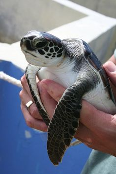 Grand Cayman - turtle farm    #fluffyhero9 #grandcayman