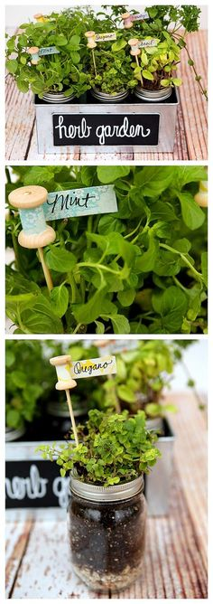 Inspiring Low-Budget Ideas for Herb Containers Using fresh herbs gives a special taste to every meal. Having an indoor herb garden will provide you will fresh herbs all year long. This way you can have your own organic, safe to use herbs. Garden Plant Markers, Garden Plants, Indoor Plants, Herb Markers, Indoor Herbs, Flowers Garden, Container Gardening, Gardening Tips, Vegetable Gardening