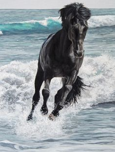 Black Stallion….Would love to be in the saddle of this horse right now…..and on the beach, no less.