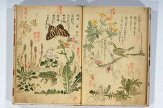 Antique Asian Nature Book
