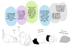 Hetalia and Nekotalia - America, England, France, and Japan : They sey pets take after their owners ... part 2/4