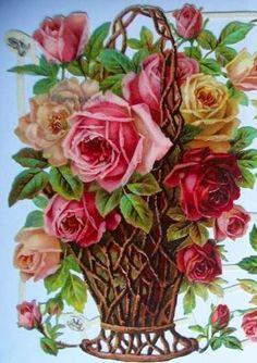 Antique Roses!!!
