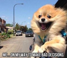 For more Funny Animals, Click HERE
