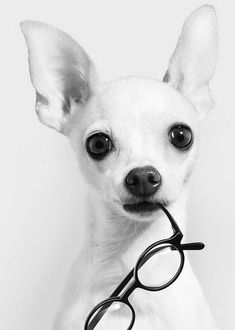 You dont need other people to validate you, youre already valuable.~ Love Your Dog? Visit our website NOW!