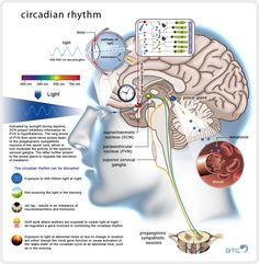 Circadian Rhythm - failure keeps us awake