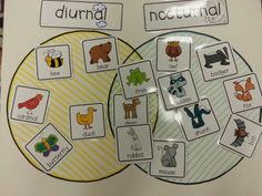 Super Wildlife Room 2: Have some animals printed out and leave some blank so the kids can research their own animals. Diurnal vs nocturnal animals Venn Diagram