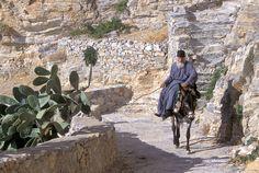Metropolitan Epifanios - Donkey transport on Island, Go Greek, Our World, Beautiful Islands, Greek Islands, Picture Video, Nostalgia, Pictures, Photos, Country