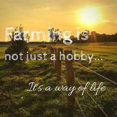 Farming is a way of life Farm Life Quotes, Farmer Quotes, Cow Quotes, Girl Quotes, Funny Quotes, Summer Beach Quotes, Way Of Life, Life Is Good, Agriculture Quotes
