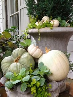 Mounds of green and white pumpkins mixed with creeping jenny and kale