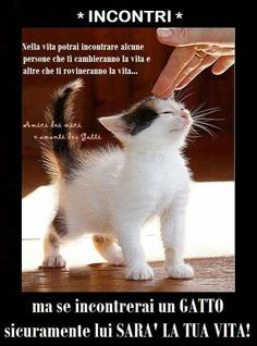 309 Fantastiche Immagini Su Vignette Gatti Cani Nel 2019 Cute