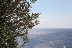 Olive & Med