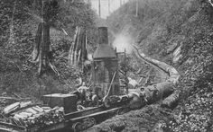 Logging in western Oregon with a steam donkey on a railroad car Log Saw, Pioneer Life, Logging Equipment, Forest Pictures, Oregon Trail, Old Trees, Steam Engine, Historical Photos, Old Photos