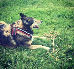 Mahtavaa että sentään koira osaa tehdä tuohta kun ei siihen isäntä pysty. #t #pooch #mutt #dog #fb