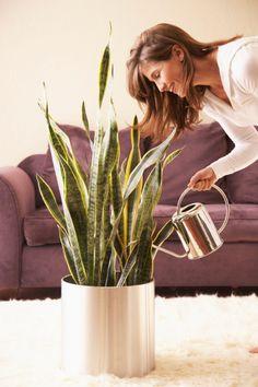 Plantas de interior ideales para personas ocupadas. Clic en la imagen para ver el artículo.