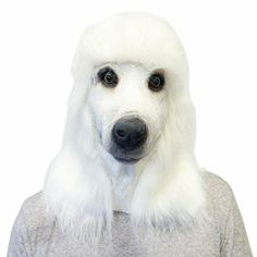 White Standard Poodle Face Mask