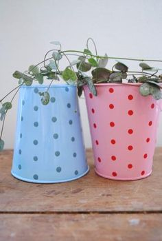 Prickiga plåtburkar (tin planters)