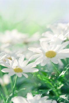 Fresh as a daisy. ;)