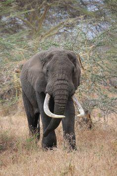Go on an African Safari in Tanzania - Bucket List