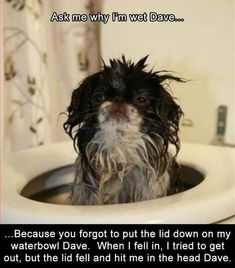 Funny Animal Pictures Of The Day - 23 Images #funnydoghumor
