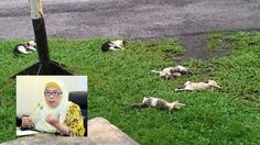 Viral kononnya kucing diracun dalam kampus : Ini penjelasan sebenar Pengarah Kampus UTM   Viral kononnya kucing diracun dalam kampus : Ini penjelasan sebenar Pengarah Kampus UTM  Sejak semalam viral sekeping gambar yang memaparkan beberapa ekor kucing mati yang kononnya akibat dianiaya di kampus Universiti Teknologi Malaysia (UTM) Kuala Lumpur.  Menangkis dakwaan itu Pengarah Kampus universiti tersebut Prof Dr. Durrishah Idrus tampil memberi penjelasan rasmi di Facebooknya semalam.  Viral…