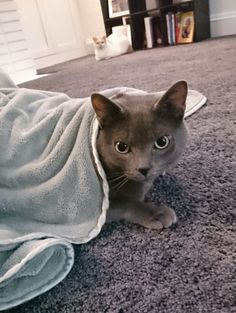 Why is the cat wet? {Friday Five} | ProbablyRachel