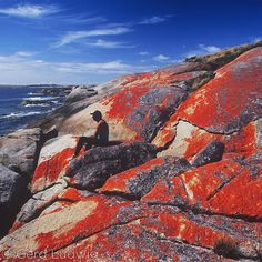 "Photo by @GerdLudwig. An aboriginal inhabitant of ""The Corner"" relaxes on a coastal rock covered by blooming red lichen. ""The Corner"" a small settlement on Cape Barren Islands is mainly populated by people of aboriginal descent. No full-blooded Tasmanian Aborigines have survived mainly as a result of the brutal annihilation campaigns in the 19th century. Since 2005 Cape Barren has been overseen by the local Aboriginal association which was the first official handover of Crown land to an…"