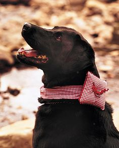 Can you just picture Deago doing this? :)    Dog Collar Ring Pillows    The wedding rings at Shannon and Nathan's wedding were attached to a hand-sewn gingham collar worn by the couple's 10-year-old Labrador retriever, Chelsea.